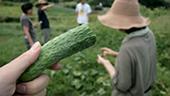 [長野]農家体験&食養生ワークショップ